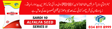 Alfalfa Seed in Pakistan