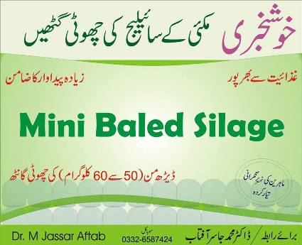 Baled Silage of Corn/Maize in Lahore, Pakistan. A Simple Solution of Fodder Shortage