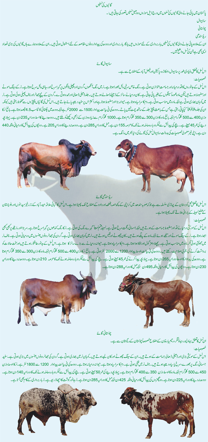 Information regarding Breeds of Dairy Animals of Pakistan in Urdu