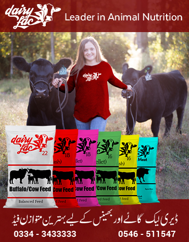 Dairy Cattle Feed Dairy Lac