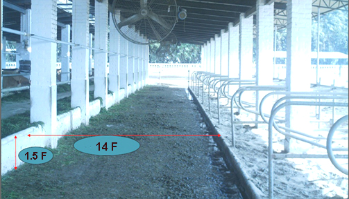 feeding area in free stall housing