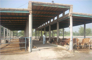Pak Dairy Info Sairy Shed Designs