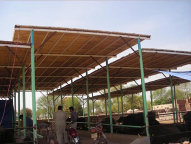 Dairy Shed Design Pakistan Download Full Shed Plans